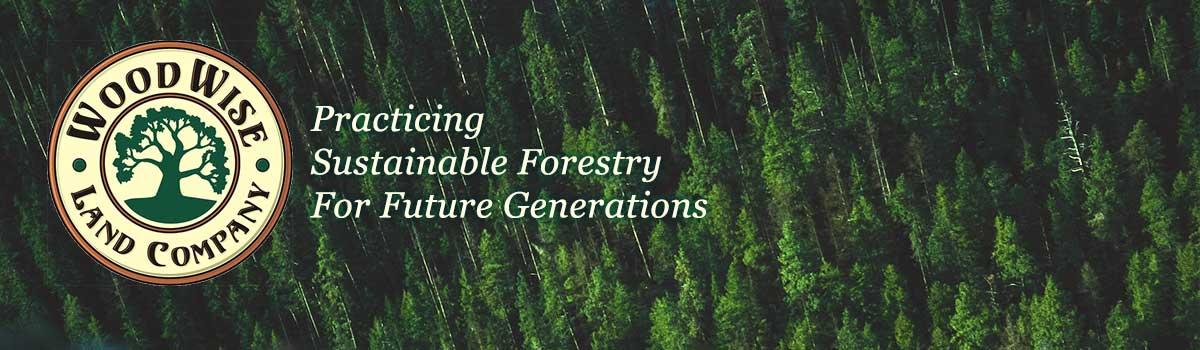 Timber | Forestry | NY | VT | WoodWise Land Company